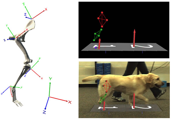 what is kinematic analysis